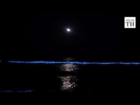 What caused the blue glow on Chennai beaches?