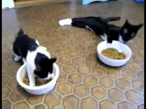 Hai con mèo SAY RƯỢU,hài vô đối luôn