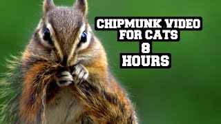 Chipmunks For Cats 2! | Relax Your Pet |  8 Hour Entertainment Video | Leave On All Day