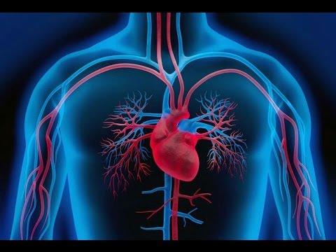 Diagnostic différentiel de lhypertension artérielle