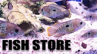 Aquarium fish store tour - MY LFS