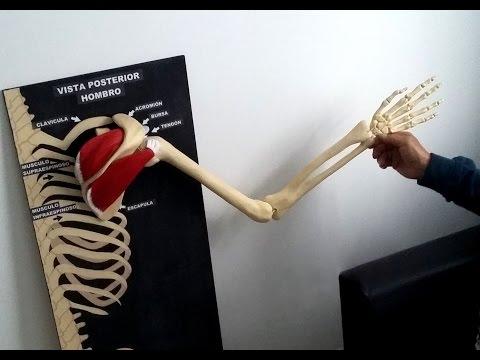 El diagnóstico de coxartrosis de cadera