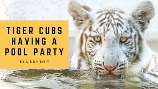 Life at the zoo | Tiger cubs having a poolparty