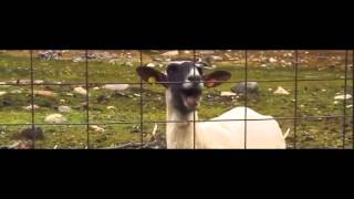 Taylor Swift – I Knew You Were A Troubled Goat