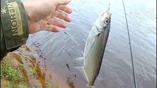 На что ловли в реке мста
