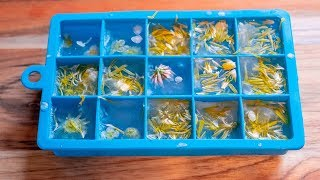 Wild Flower Ice Cubes Recipe | Make Your Drinks/Cocktails Look Beautiful By Foraging