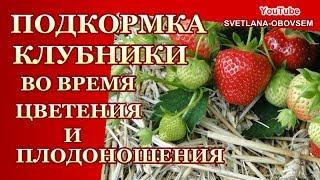 СУПЕР  ПОДКОРМКА  КЛУБНИКИ ВО  ВРЕМЯ ЦВЕТЕНИЯ И ПЛОДОНОШЕНИЯ ДЛЯ  ХОРОШЕГО  УРОЖАЯ ..