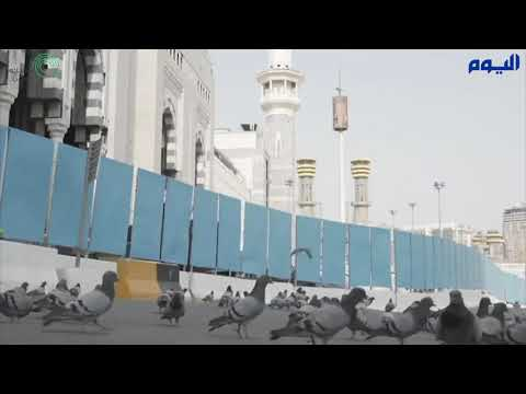 في مشهد غير مألوف.. أسراب حمام الحرم تجوب شوارع مكة هذه الأيام على غير المعتاد