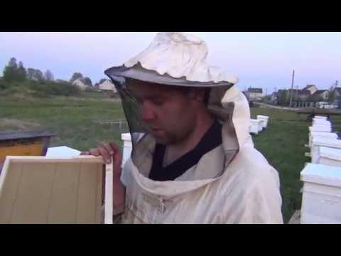 """Подсадка роя на """"голую"""" Вощину Пчеловодство +Для Начинающих Ульи +Для Пчел"""