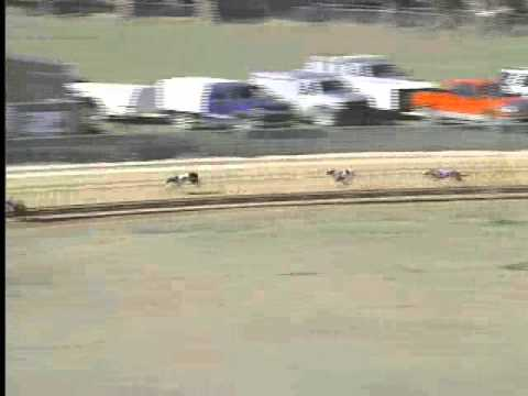 Race 7 Ark Greyhound Assoc Main