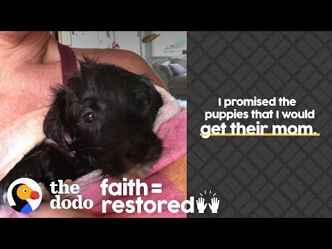 Download Woman Is Determined To Reunite Stray Dog With Her Puppies | The Dodo Faith = Restored HD Mp4 3GP Video and MP3