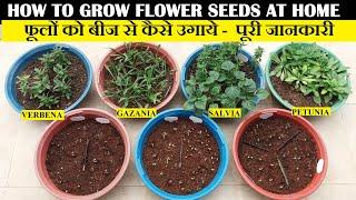फुलों के बीज कैसे ग्रो करें | How To Grow Flower Seeds At Home (FULL UPDATES)