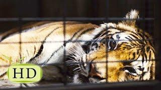 Принцип на всю Жизнь. 20 секунд отчаянной Храбрости. Мы купили зоопарк.