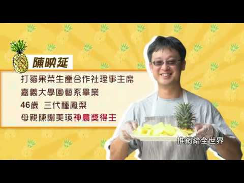 【在地鮮食尚】打貓鳳梨季 新鮮正美味