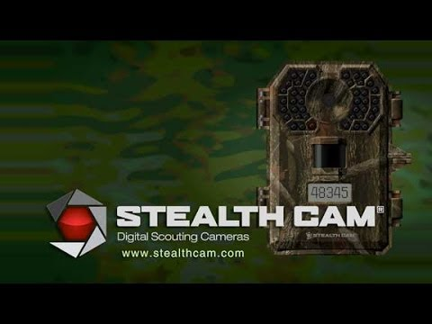 Stealth Cam Scouts When You Can't