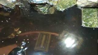 Turtle Pond Update - Part 2