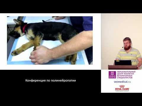Копытов К. Г. - Острый полирадикулоневрит собак.
