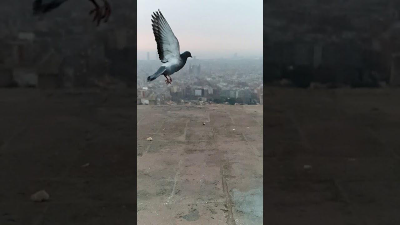 Nur ein Flügelschlag
