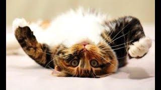 Я РЖАЛ ЦЕЛЫЙ ДЕНЬ - СМЕШНЫЕ КОТЫ - ТЕСТ НА ПСИХИКУ - 2019 ♥ Cat Marabacha #43