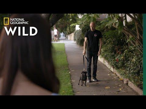 Teaching an Aggressive Dog to Leash Walk | Dog: Impossible
