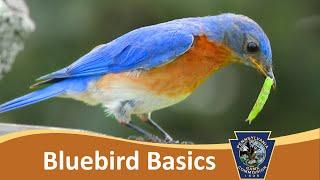 Bluebird Basics & Cavity Nest Boxes