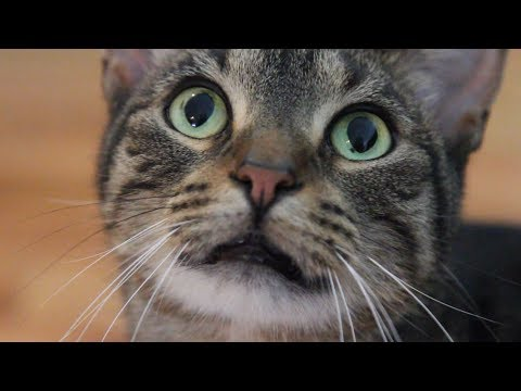 How Not to Make Your Cat Internet Famous | Mashable