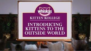Letting Kittens Go Outside : Kitten Kollege