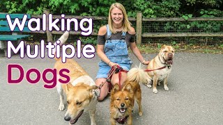 The SECRET to Walking Multiple Dogs AT THE SAME TIME | InRuffCompany.com