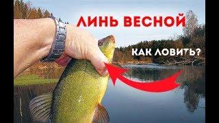 Весенняя рыбалка на карася и линя