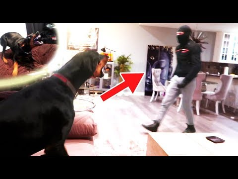HE BROKE INTO MY HOUSE!! (Will my Doberman protect me from a break-in)