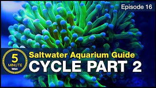 Skip the ugly phase. Step 2 of cycling your saltwater tank with utilitarian fish & bacterial troops