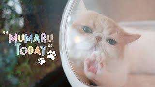 MUMARU Today 1 🐾
