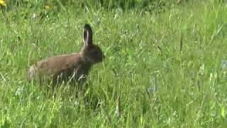 Зайчонок - новая встреча