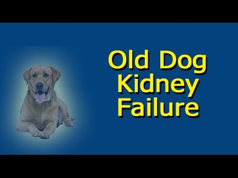 Video Old Dog Kidney Failure