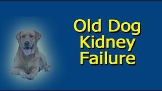 Old Dog Kidney Failure