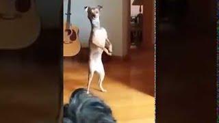 animales el perro se para sobre dos patas