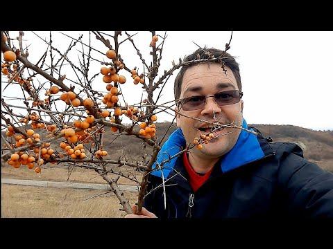 Milyen férgek fertőzhetnek a pulykahúsot
