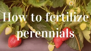 The Importance of Fertilizing Perennials & How to Do It