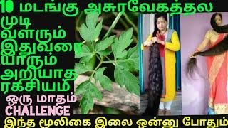 வெட்ட,வெட்ட முடி வளந்துட்டே இருக்கும் இந்த இலை போதும்/ Fast,long Hair Growth Tips Tamil/hair Fall Ti