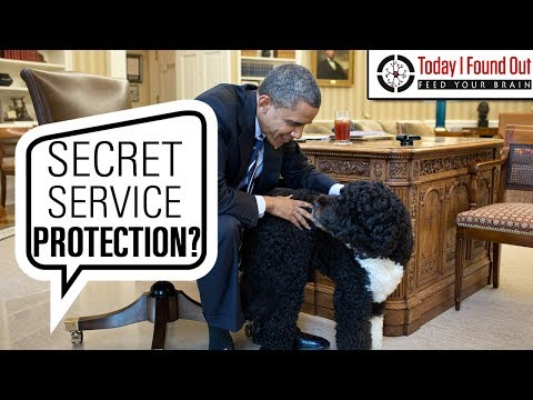 Does the President's Dog Get Its Own Secret Service Agents?