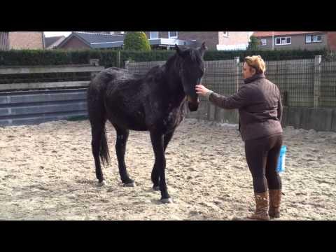 TEAM RUSSIA PETLOVE HORSE видео Online - Clipes.ru