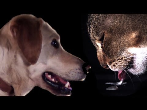 Cats vs Dogs in slow motion - Slo Mo #5 - Earth Unplugged