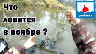 За щукой почти в ноябре_отчёт о рыбалке