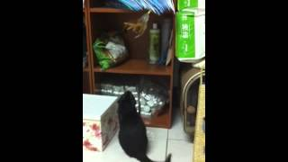 Charlie playing with feathers - Video Youtube