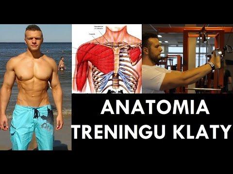 Rozwój mięśni szkieletowych