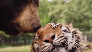 Are Animals Capable Of Feeling Complex Emotions? | Animal Odd Couples | Animal Adventures