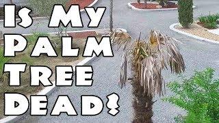 Is My Palm Tree Dead?