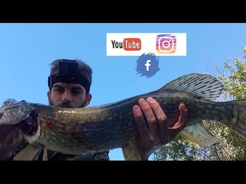 La pesca in un taiga su video