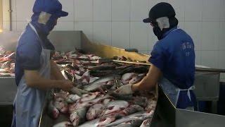 Tin Tức 24h: Mỹ áp thuế chống bán phá giá với cá tra Việt Nam