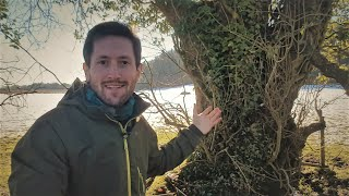 Managing Trees for Self-sufficiency: Permaculture and Coppicing